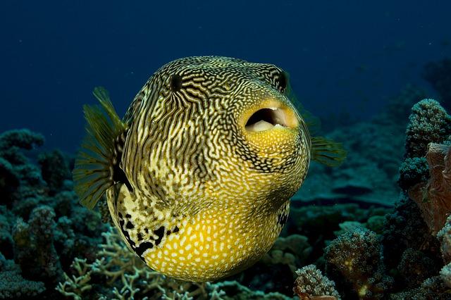 strakatá ryba