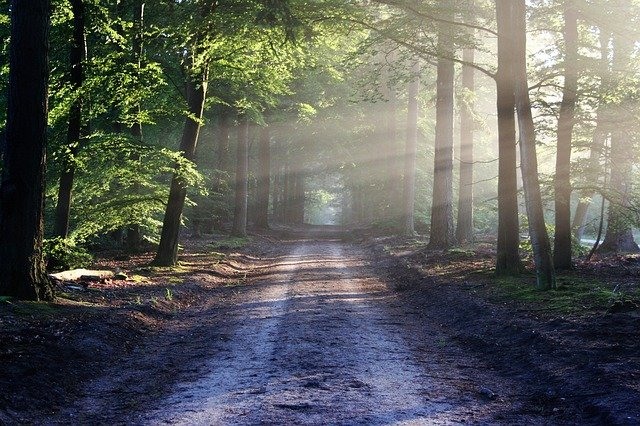 lesní silnice